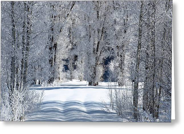 The Untraveled Winter Road Greeting Card