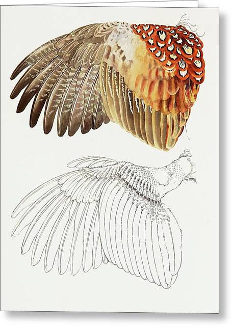 The Upper Side Of The Pheasant Wing Greeting Card