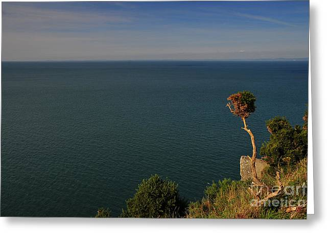 The Valley Of The Rocks Greeting Card by Nichola Denny