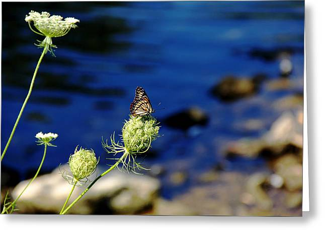 The Viceroy And The Queen Greeting Card by Debbie Oppermann
