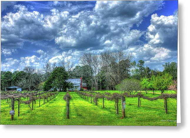 The Vineyard Vines Landscape Photography Art Greeting Card by Reid Callaway