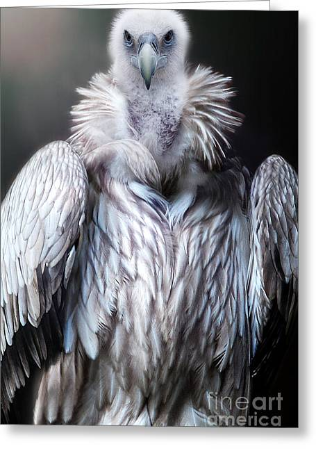 Greeting Card featuring the photograph The Vulture by Christine Sponchia