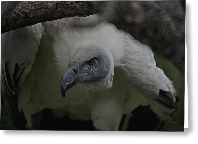 The Vulture Dry Brushed Greeting Card by Ernie Echols