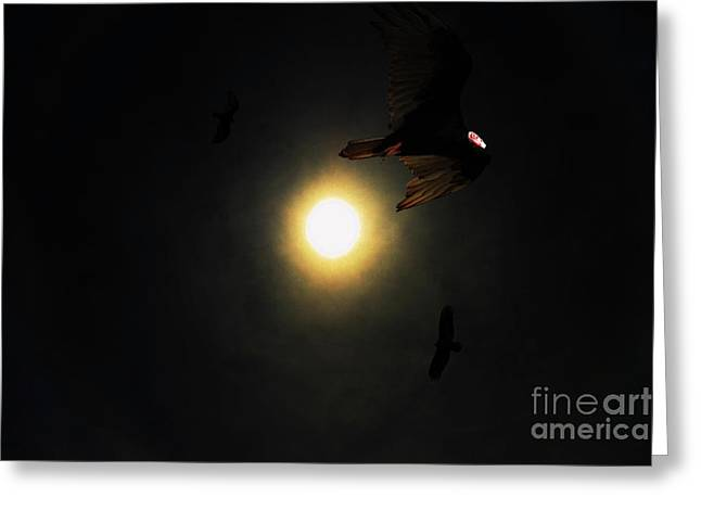 The Vultures Have Gathered In My Dreams Greeting Card by Wingsdomain Art and Photography