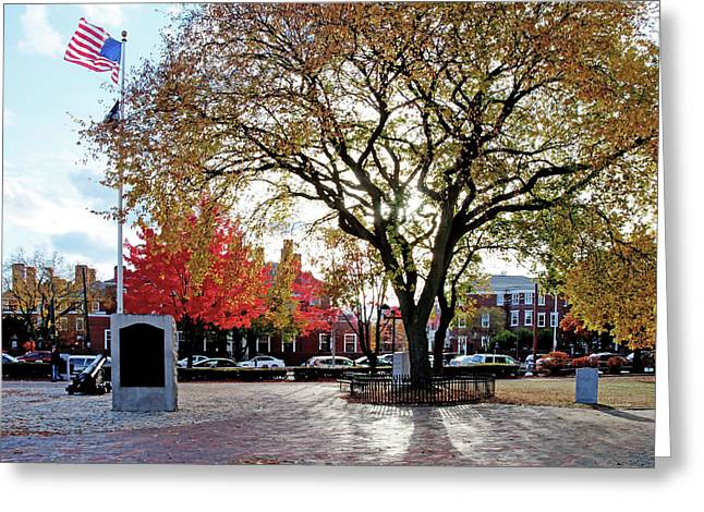 Greeting Card featuring the photograph The Washington Elm by Wayne Marshall Chase