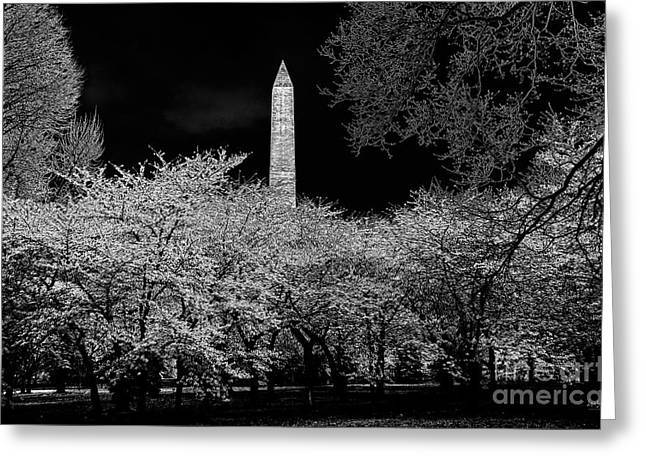 The Washington Monument At Night Greeting Card by Lois Bryan
