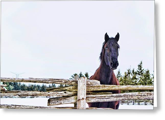 Greeting Card featuring the photograph The Watcher 2 by Traci Cottingham