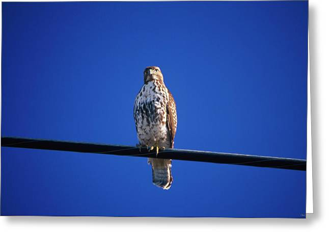The Watcher - North Coast Highway One Greeting Card by Soli Deo Gloria Wilderness And Wildlife Photography