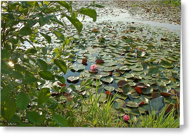 The Water Lily Pond Greeting Card by Molly Dean