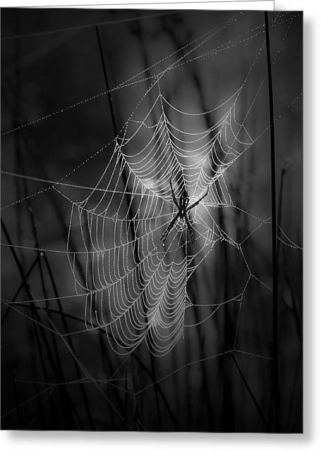 The Weaver Greeting Card by Ron Jones