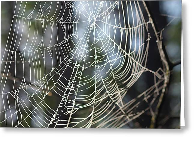 The Web Greeting Card by Diane Luke