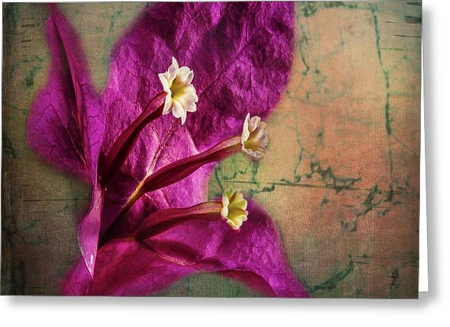 Greeting Card featuring the photograph The Well Dressed Bougainvillea by Bellesouth Studio