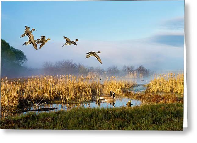 The Wetlands Crop Greeting Card