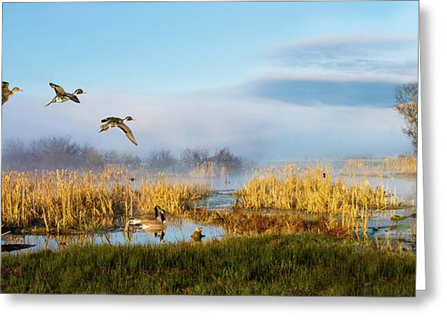The Wetlands Greeting Card by TL Mair
