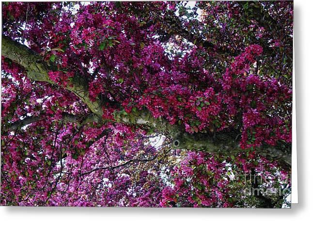The Whistling Tree Limb Greeting Card by Marsha Heiken