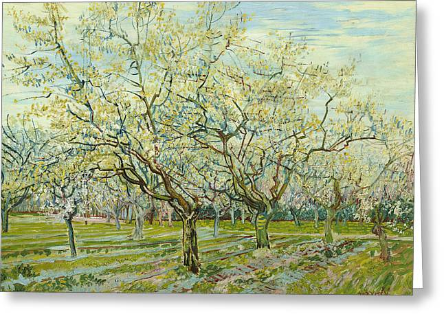 The White Orchard  Greeting Card by Vincent van Gogh