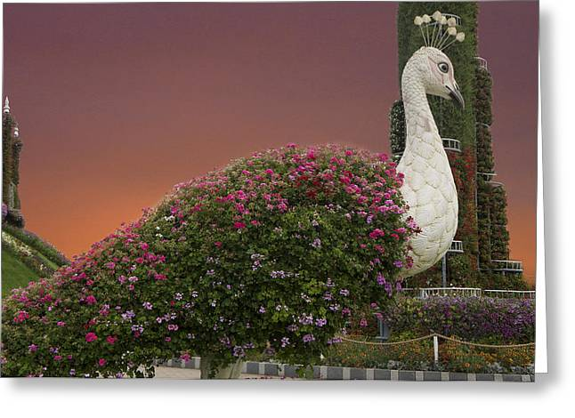 The White Peacock Greeting Card by Art Spectrum
