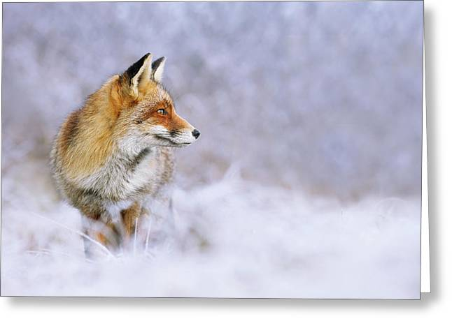 The White, Red And Blue- Red Fox In The Snow Greeting Card by Roeselien Raimond
