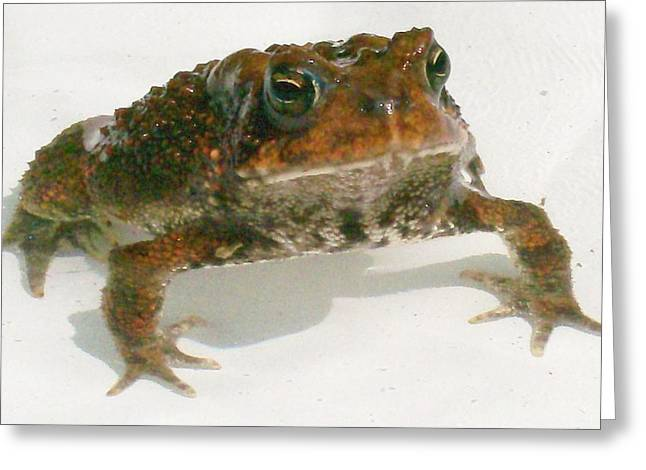 Greeting Card featuring the digital art The Whole Toad by Barbara S Nickerson
