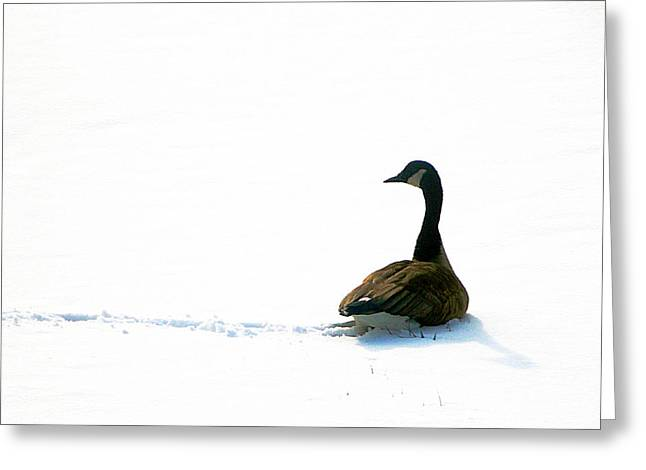 The Wild Goose Once More Greeting Card