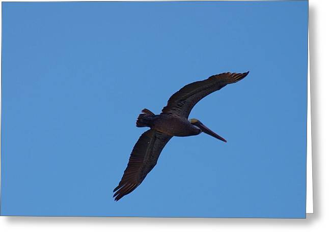 The Wind Beneath My Wings Greeting Card