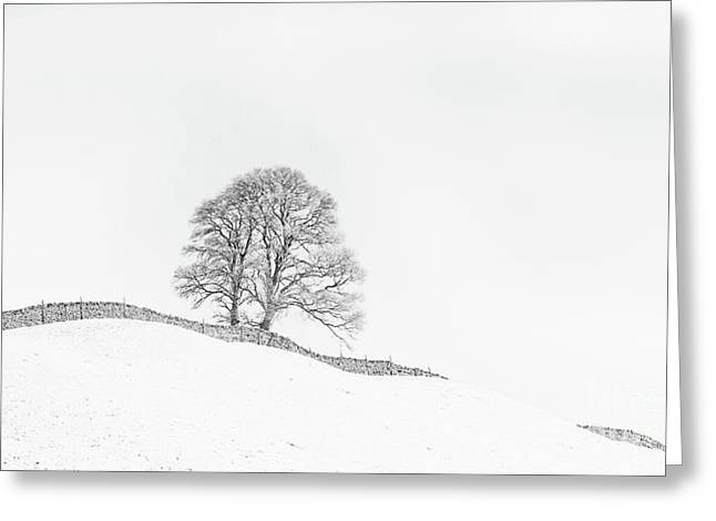 The Winding Wall Greeting Card by Janet Burdon
