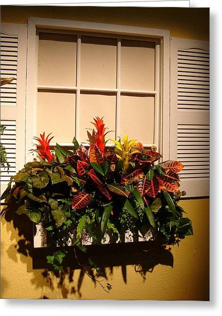 The Window Box Greeting Card