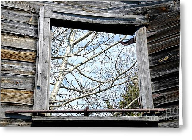 The Window Greeting Card by Sandra Updyke