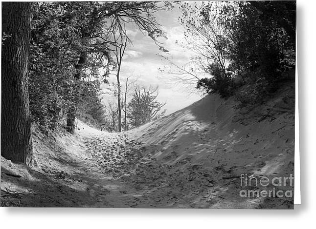 The Windy Path Greeting Card by Cathy  Beharriell