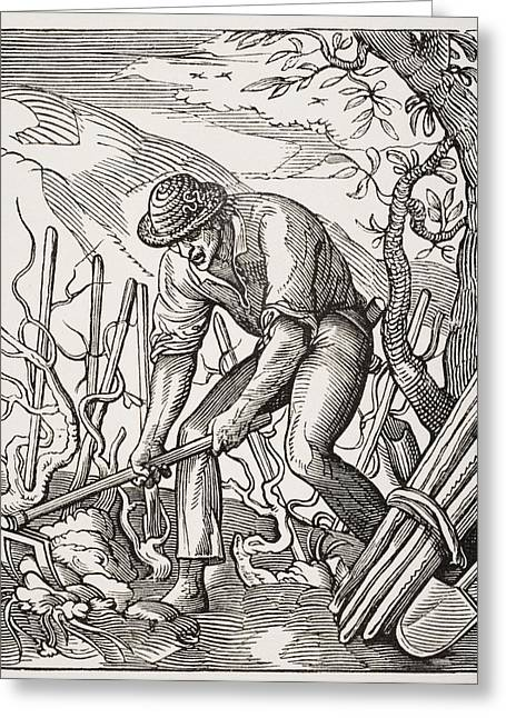 The Wine Grower. 19th Century Greeting Card