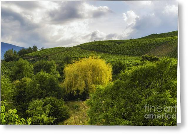 the wineyards of Loc Greeting Card by Michelle Meenawong