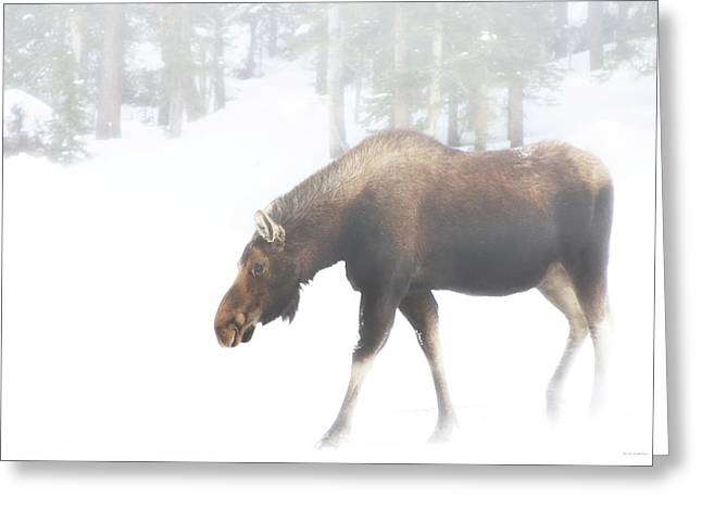 The Winter Moose Greeting Card
