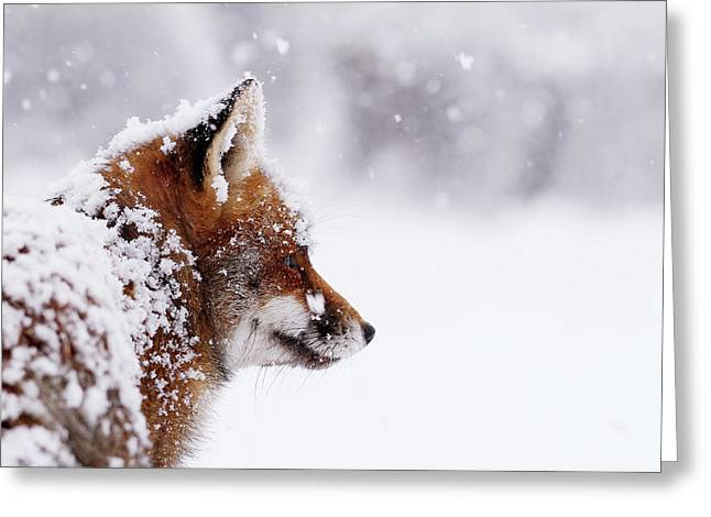 The Winterwatcher - Red Fox In The Snow Greeting Card by Roeselien Raimond