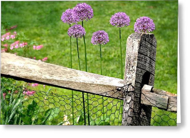 The Wired Fence Greeting Card by Diana Angstadt