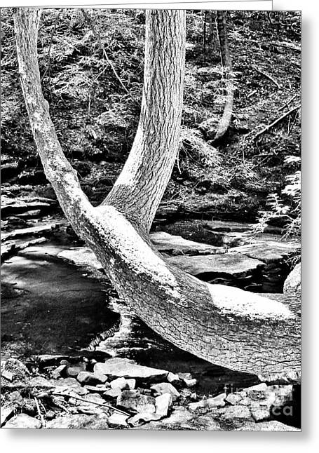 The Wishbone Tree Bw Greeting Card