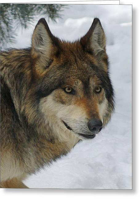 The Wolf 2 Greeting Card by Ernie Echols