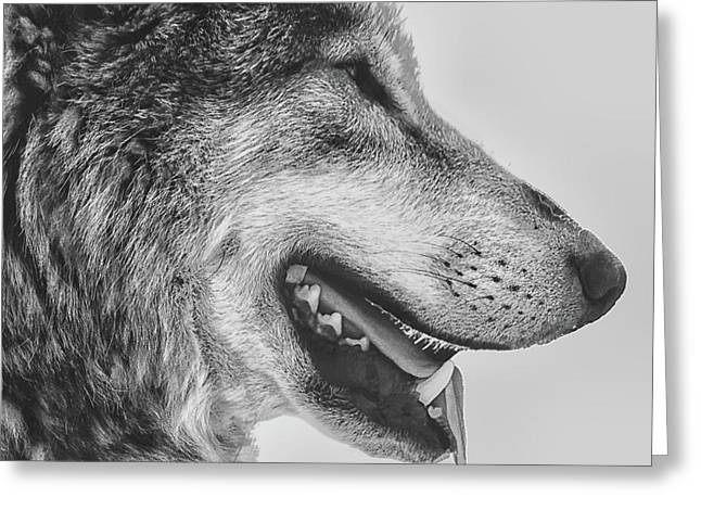 The Wolf Greeting Card by Martin Newman