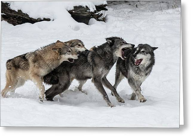 The Wolf Pack Greeting Card
