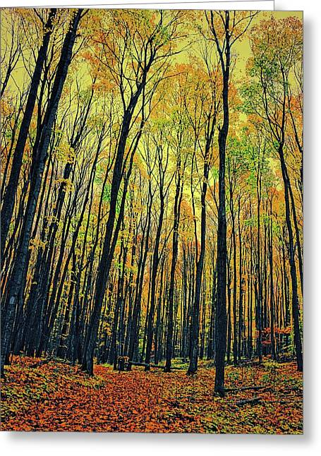 Greeting Card featuring the photograph The Woods In The North by Michelle Calkins
