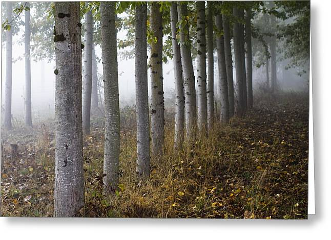 Fog Greeting Cards - The Woods Greeting Card by Rebecca Cozart