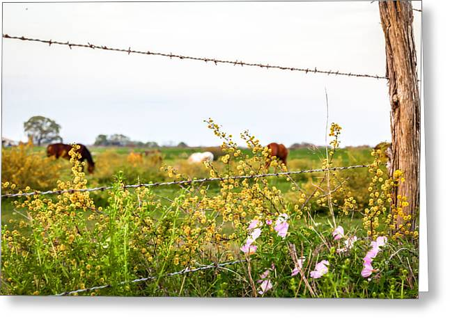 Greeting Card featuring the photograph The Wrong Side Of The Fence by Melinda Ledsome