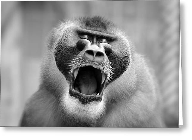 The Yawn I Greeting Card by Antje Wenner