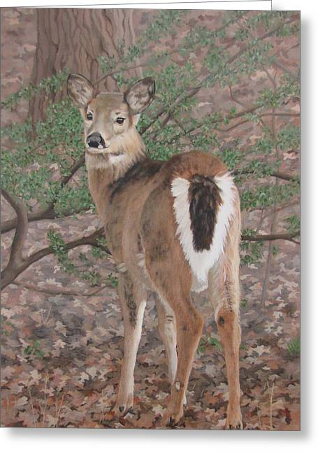 The Yearling Greeting Card by Sandra Chase