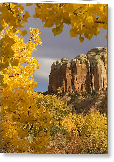 Cristo Greeting Cards - The Yellow Leaves Of Fall Frame A Rock Greeting Card by Ralph Lee Hopkins