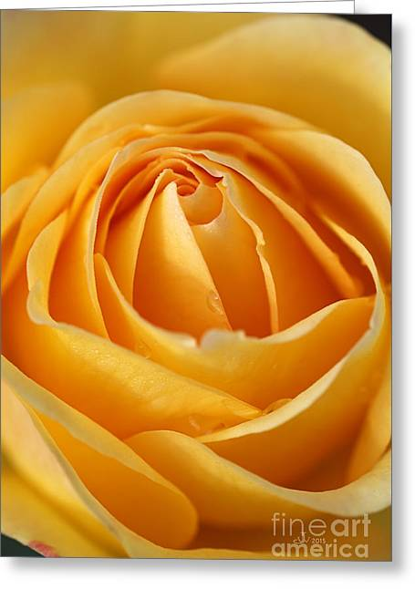 The Yellow Rose Greeting Card by Joy Watson