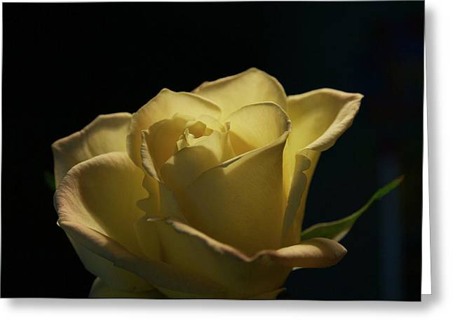 The Yellow Rose Greeting Card by Sheryl Thomas