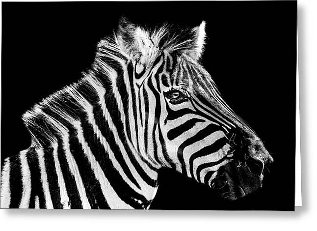The Zebra Stripes Greeting Card