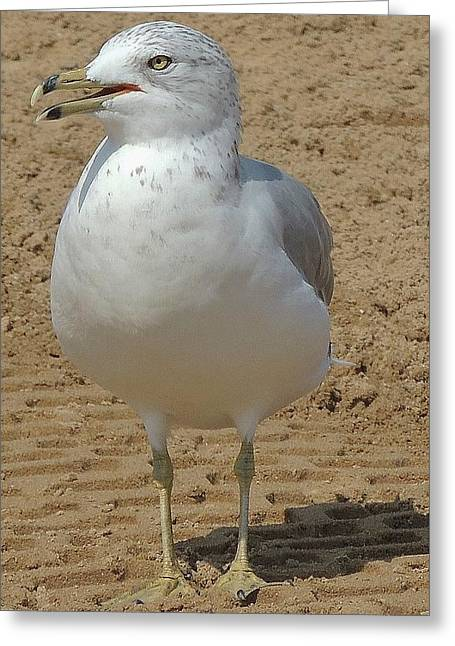 Belmont Beach Bird Greeting Card
