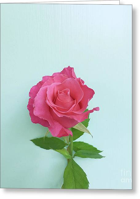 Greeting Card featuring the photograph There Is Simply The Rose by Cindy Garber Iverson