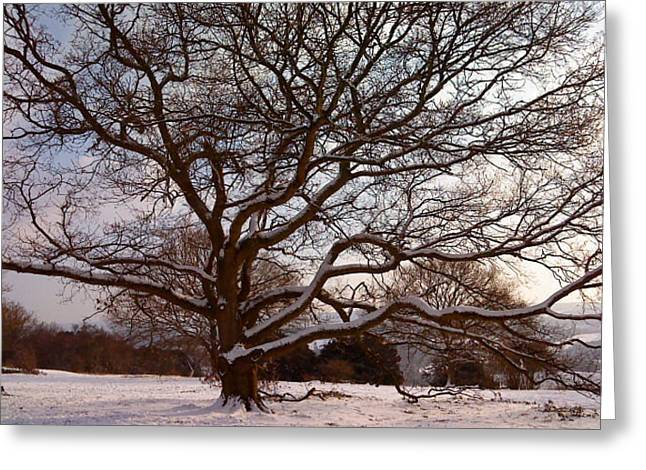 Greeting Card featuring the photograph There Was A Tree by Mira Cooke